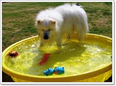 Dogilike.com :: วิธีการรับมือกับพฤติกรรมน้องหมาในหน้าร้อน