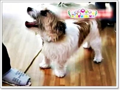 Dogilike.com :: วิธีการฝึกน้องหมาให้เชื่อฟังแบบสุดแปลก โหด มันส์