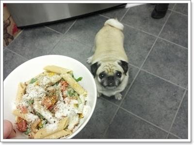 Dogilike.com :: ปฏิบัติการ! ฝึกความอดทนเรื่องการกินให้น้องหมาปั๊ก