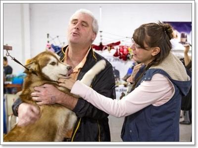 Dogilike.com :: ฟังอย่างเข้าใจ ... พฤติกรรมการหอนของไซบีเรียน ฮัสกี้
