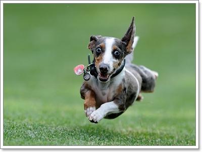 Dogilike.com :: ช่วงวัยน้องหมาที่เปลี่ยนไปมีผลต่อพฤติกรรมอย่างไร