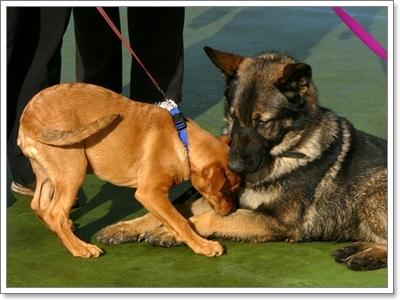 Dogilike.com :: ฝึกลูกหมาตัวน้อยให้เข้าสังคมแบบมืออาชีพ