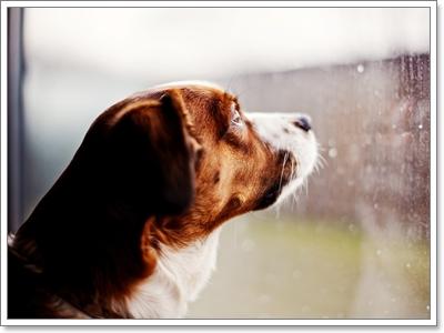 Dogilike.com :: จริงหรือไม่??? สภาพอากาศส่งผลต่อพฤติกรรมน้องหมา