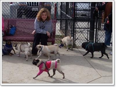 Dogilike.com :: เผย! กลเม็ดเผด็จความขี้เกียจของน้องหมาพันธุ์ปั๊ก