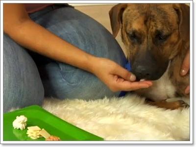 Dogilike.com :: รวมเทคนิคการป้อนยาน้องหมาพันธุ์ใหญ่ ง่ายสุดๆ