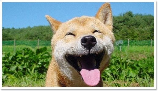 Dogilike.com :: น้องหมายิ้มเพราะรู้สึกมีความสุขจริงหรือ?!