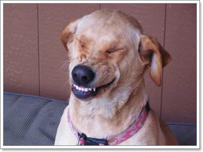 smile-dog-1.jpg