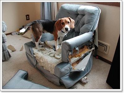 Dogilike.com :: อาการ Phobia ในน้องหมา ... เรื่องใกล้ตัวที่อาจคาดไม่ถึง