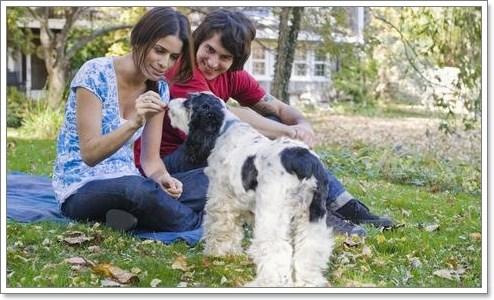 Dogilike.com :: อยากฝึกน้องหมา แต่ไม่ค่อยมีเวลาควรทำอย่างไร