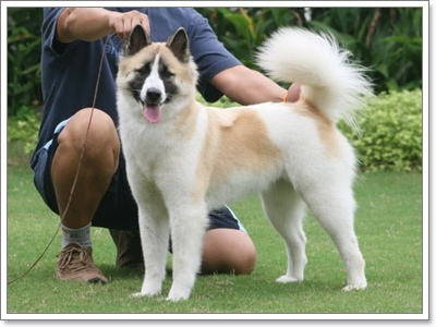 Dogilike.com :: ทำอย่างไร!? กับนิสัยขี้หวงของน้องหมาบางแก้ว