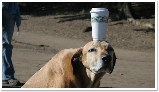 Dogilike.com :: จับน้องหมาฝึกสมาธิ สุดยอดเทคนิคขจัดได้ทุกปัญหา!