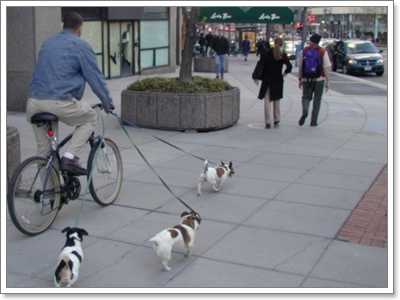 Dogilike.com :: ในช่วงเวลา 1 วัน น้องหมามีพฤติกรรมเปลี่ยนไปอย่างไรบ้าง