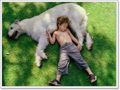 Dogilike.com :: เชื่อใจหมาตัวใหญ่ให้เฝ้าบ้านได้แค่ไหน ?