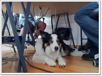 Dogilike.com :: ทำอย่างไร!? ให้น้องหมายอมรับเราเป็นเจ้าของ