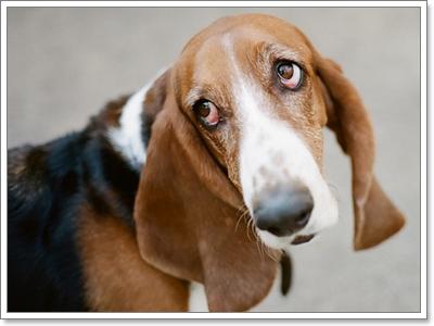 Dogilike.com :: 10 พฤติกรรมแปลกๆ ของน้องหมาแก่