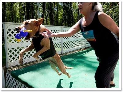 Dogilike.com :: เทคนิคการฝึกน้องหมาให้เป็นมากกว่า...หมา