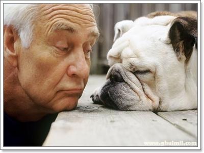 Dogilike.com :: เทคนิคการฝึกน้องหมาให้อยู่ร่วมกับผู้สูงอายุอย่างปลอดภัย