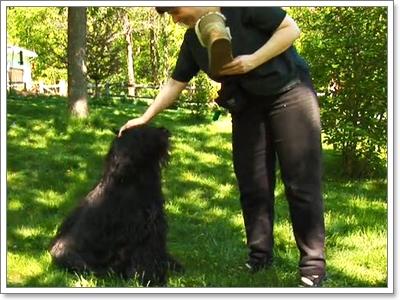 Dogilike.com :: เทคนิคการฝึกน้องหมาให้ปล่อยของออกจากปาก