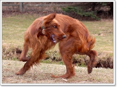 Dogilike.com :: การแสดงความดีใจของน้องหมาแบบแปลกๆ