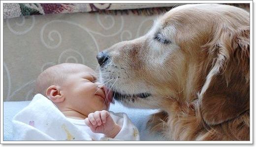 Dogilike.com :: วิธีการผูกมิตรน้องหมาให้เข้ากับเจ้านายคนใหม่ของครอบครัว