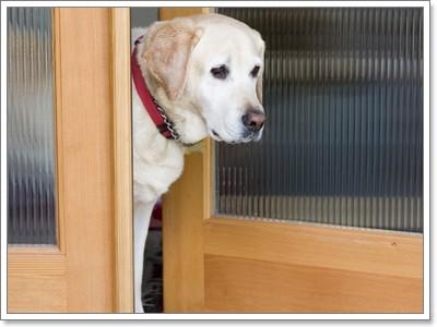 Dogilike.com :: เคล็ด (ไม่) ลับ! การฝึกให้น้องหมารู้จักควบคุมตัวเอง