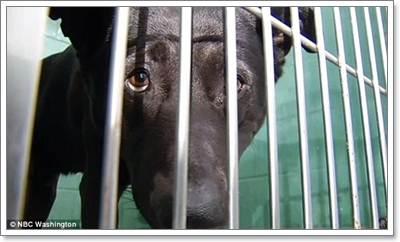 Dogilike.com :: รวมเรื่องราวสุดประทับใจ ... น้องหมาเปลี่ยนชีวิต