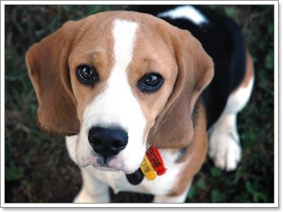 Dogilike.com :: เผย! น้องหมา 3 สายพันธุ์ที่ถูกทิ้งมากที่สุด
