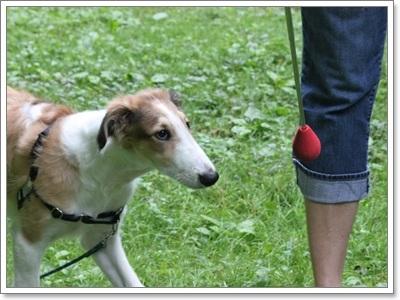 Dogilike.com :: รวมอุปกรณ์ช่วยฝึกน้องหมาให้ทำตามคำสั่งอย่างว่าง่าย