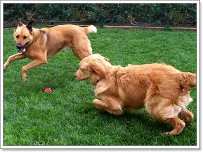 Dogilike.com :: ได้เวลา! จัดการน้องหมาจอมไฮเปอร์อย่างถูกวิธี