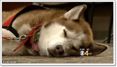 Dogilike.com :: ยกย่อง! ตูบนอนให้ความอบอุ่นเจ้าของที่ประสบอุบัติเหตุสกีหิมะ