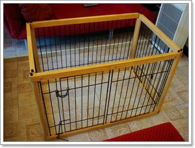 Dogilike.com :: 4 วิธีเตรียมความพร้อมให้น้องหมาอยู่ร่วมกับหญิงตั้งครรภ์