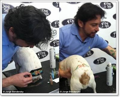 Dogilike.com :: Glitter Tattoo เทรนด์ใหม่มาแรงสำหรับน้องหมา
