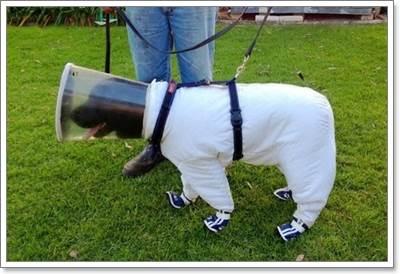 Dogilike.com :: Bazz ตูบนักดมกลิ่น ผู้ช่วยมือดีแห่งฟาร์มผึ้งในสหรัฐ