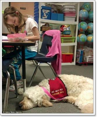 Dogilike.com :: LilyBelle สุนัขช่วยเหลือ คู่ใจสาวน้อยป่วยโรคภูมิแพ้ถั่ว!