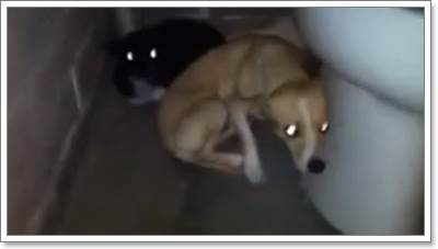 Dogilike.com :: จนท.ช่วยชีวิต 2 ชิวาวาถูกทิ้งในห้องน้ำสาธารณะ