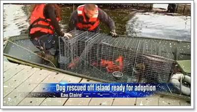 Dogilike.com :: หน่วยกู้ภัยช่วยสุนัขถูกทิ้งบนเกาะในสหรัฐฯ