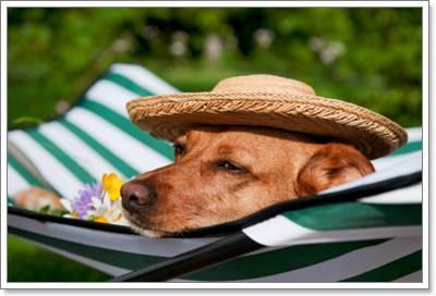 Dogilike.com :: การดูแลสุขภาพสุนัขในแต่ละสภาพอากาศ