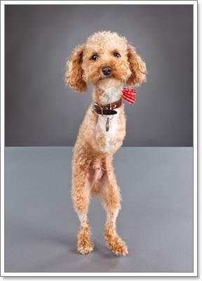 Dogilike.com :: 6 สาเหตุใกล้ตัวที่มักทำให้น้องหมาพิการ