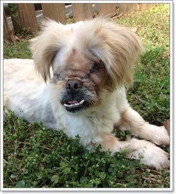 Dogilike.com :: Daisy สุนัขตาบอดหูหนวกผู้ไม่ยอมแพ้ต่อโชคชะตา!