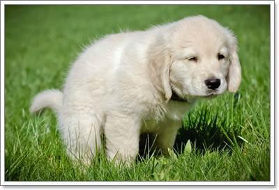 Dogilike.com :: มาเปลี่ยนหมาบ้านๆ ให้เป็นน้องหมานิสัยดีกันเถอะ!