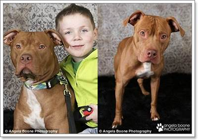 Dogilike.com :: พิทบูลแสนรู้! เห่าเตือนช่วยชีวิตเด็กน้ำตาลในเลือดต่ำ