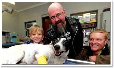 Dogilike.com :: น่ายกย่อง! พลเมืองดีเสี่ยงชีวิตช่วยสุนัขถูกรถชน