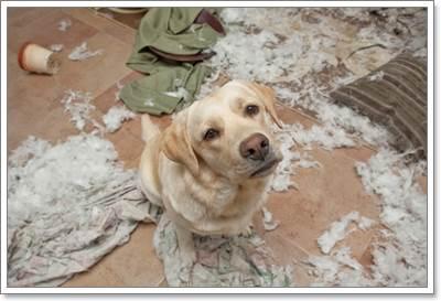 Dogilike.com :: เมื่อต้องทิ้งสุนัขให้อยู่บ้านลำพัง จะต้องเตรียมตัวอย่างไร