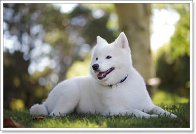 Dogilike.com :: ╙Хг╖ЮгерЮкарпмм║║сея╖║рб╒м╖╧Им╖карЦ╧к╧ИрцИм╧