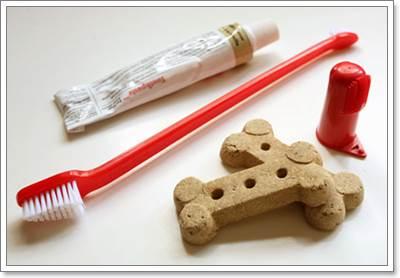 Dogilike.com :: รู้ไหม? น้องหมาก็ต้องแปรงฟันเหมือนกันนะ