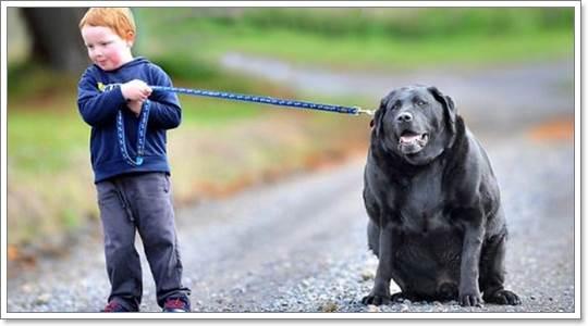 Dogilike.com :: เทรนด์การออกกำลังกายต้านโรคอ้วนในสุนัข ปี 2013