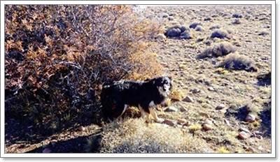 Dogilike.com :: ซื่อสัตย์! สุนัขนอนเฝ้าศพเจ้าของท่ามกลางหิมะนาน 23 วัน