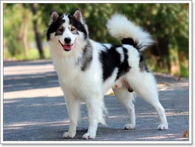 Dogilike.com :: เตรียมตัวให้พร้อมก่อนเลี้ยงน้องหมาไทยบางแก้ว