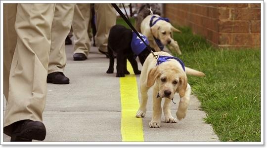 Dogilike.com :: เทคนิคการเลี้ยงสุนัขสุดเว่อร์ของผู้เลี้ยงญี่ปุ่น อังกฤษ อเมริกา