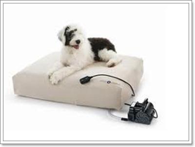 Dogilike.com :: 5 เคล็ดลับจัดที่นอนให้น้องหมาแก่ น้องหมาพิการ